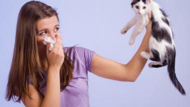 Проф. д-р Тодор Попов: Котката е едно от най-алергизиращите животни!