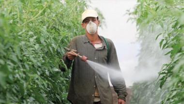 Пестицидите увеличават риска от рак