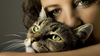 Какви болести откриват и лекуват котките