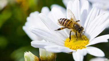 Пчелните продукти са лек за 200 болести