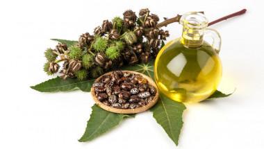 Рициново масло - лечебната сила на отровата