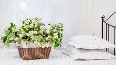 Растения, които могат да ви придружат в спалнята