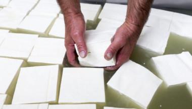 Мръсните тайни на млечната индустрия