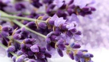 Изхвърлете успокоителните! Миризмата на това цвете ще ви помогне да се отървете от безпокойството