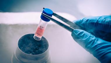 Митове и истини  за стволовите клетки