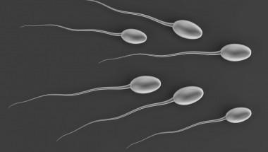 14 интересни факти за сперматозоидите, които вероятно не знаете