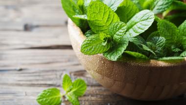 10 неща, които се случват с тялото ви, когато ядете прясна мента