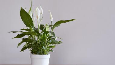 НАСА препоръчва да имате в дома си някое от тези 18 растения, защото... (СНИМКИ)