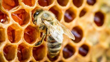 Д-р Димитър Пашкулев: Пчелният прашец е най-силният природен лек