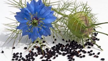 3 народни рецепти с това древно растение ще ви спасят от мигрената, ревматизма и високото кръвно