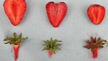 Търговец на едро разкри 5-те тайни, по които да познаем ИСТИНСКАТА ягода
