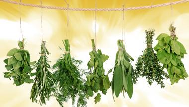 6 билки за отлично храносмилане