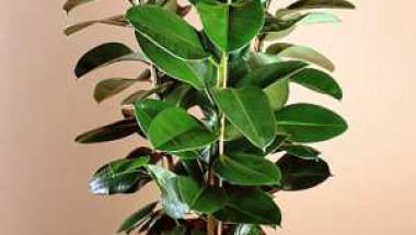 Трябва да имате едно от тези растения в дома си (СНИМКИ)