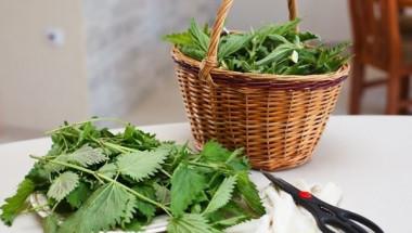 """""""Растението на вечната младост"""": Подхранва, изцелява и регенерира клетките ви и бори куп болести"""