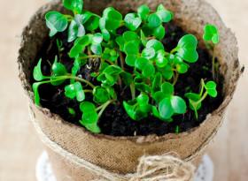 Вече не купувайте хапчета от аптеката, всички лекарства може да се отглеждат в саксии: 7 вида полезни растения! (СНИМКИ)