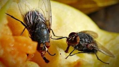 Какво ще се случи с храната ви, ако на нея кацне муха?