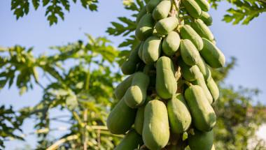 Този екзотичен плод не само е пълен с витамини, но и ще направи чудеса със сърцето, очите и стомаха ви