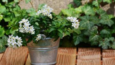 Дръжте тези 5 растения до леглото си и ще решите най-сериозния си проблем