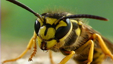 10 ухапвания от насекоми, които всеки би трябвало да може да идентифицира (СНИМКИ)