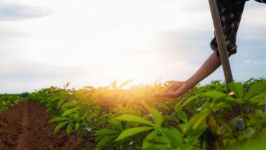 Маниока – една от най-полезните храни
