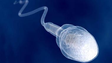 За по-качествена сперма и слаби деца, яжте...