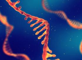 """""""Убийственият код"""" на природата може да унищожи рака"""