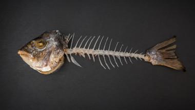 Внимание! Ако рибена кост се заклещи в гърлото ви, в никакъв случай не правете ТОВА