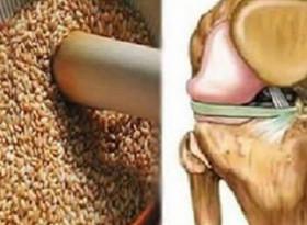 Мощна рецепта от семена бори болките в сухожилията и колената