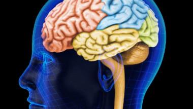 Как да подмладим мозъка си след 50-годишна възраст?