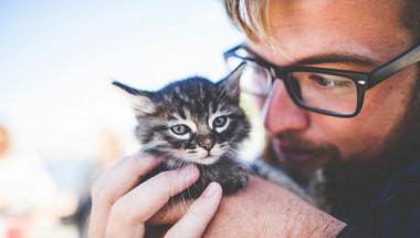 Учените обясниха защо всеки мъж трябва да има котка