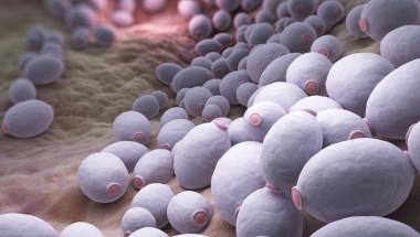 Програма  за справяне  с гъбичките в организма