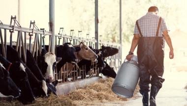Истини и митове за млякото