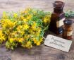Доц. Величка Андонова: Разработваме продукт с жълт кантарион за бързо заздравяване на рани