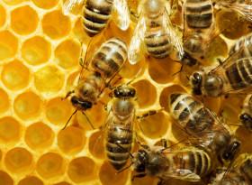 Митове и истини за меда: Как да се лекуваме