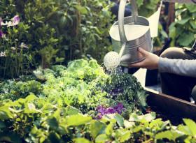 Лехата със зеленчуци може да замени цяла аптечка
