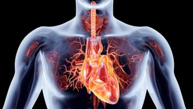 6 органи, без които човек може да живее