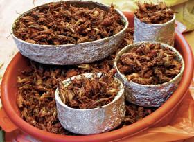 Учени настояват да се храним с насекоми