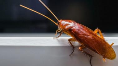 Отървете се лесно от опасните за здравето хлебарки