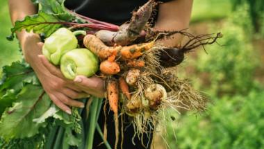 Какви зеленчуци не трябва да се слагат в едно ястие заедно