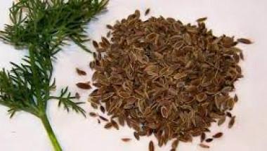 Какви лекарства могат да бъдат заменени със семена от копър