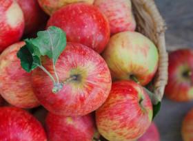 Кога е опасно да ядете ябълки