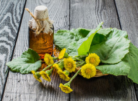Билката подбел помага при грип