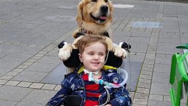Кучето сложи лапа на ръката на умиращо момче и го изцели