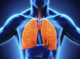 6 храни пазят белите ни дробове здрави