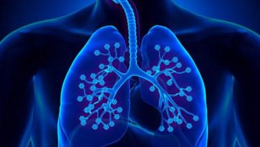 Учен обясни как да опазим белите си дробове при коронавирус