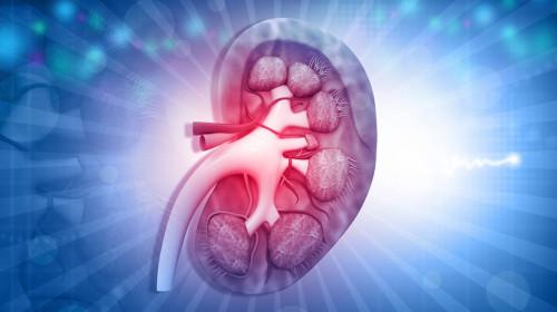 Доц. д-р Атанас Кундурджиев: Бъбреците най-много участват в регулирането на кръвното налягане
