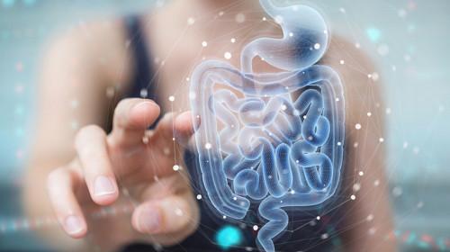 От микробиома на червата зависи разграждането на храната