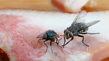 Какво става с храната, когато муха кацне върху нея, истината е много по-страшна