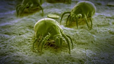 Хиляди паразити живеят в леглото ви