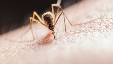 Лекар обясни кога ухапване от комар е опасно
